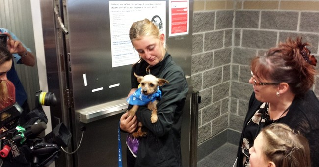 Stolen Yorkie found in Iowa is reunited with Louisiana owner