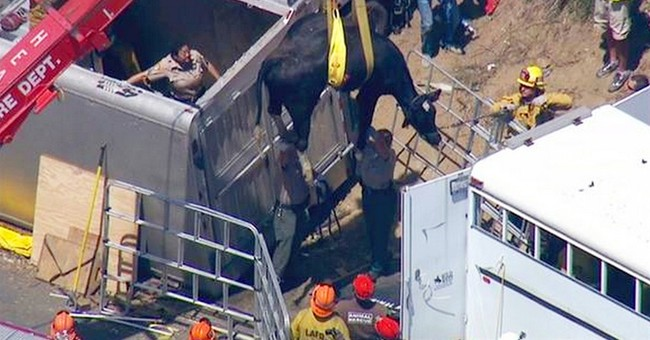 Trailer carrying cows, sheep overturns on California freeway