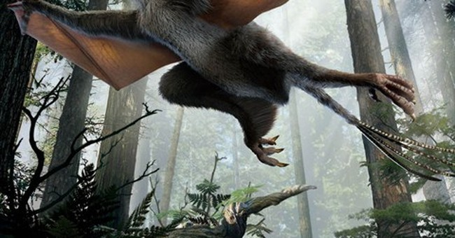 Tiny Chinese dinosaur sported unusual wings, fossil suggests