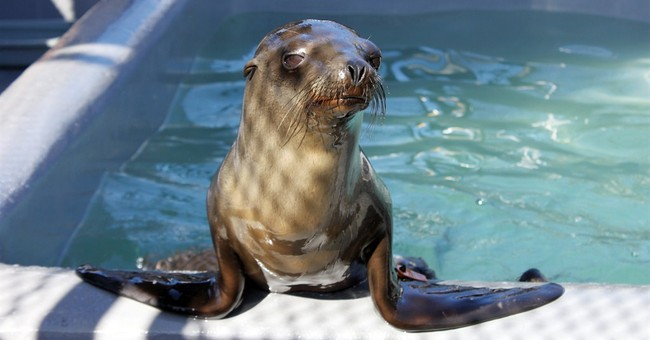 Sea lion pup spotted on San Francisco sidewalk gets rescued