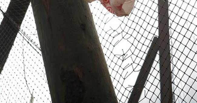 Arizona lawmakers tell cities they can't ban plastic bags