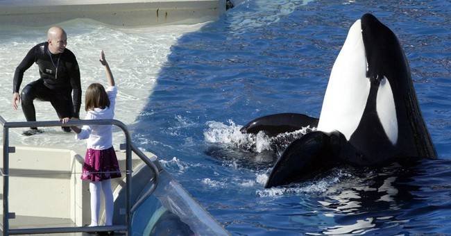 SeaWorld cited over safety of trainers who work with orcas