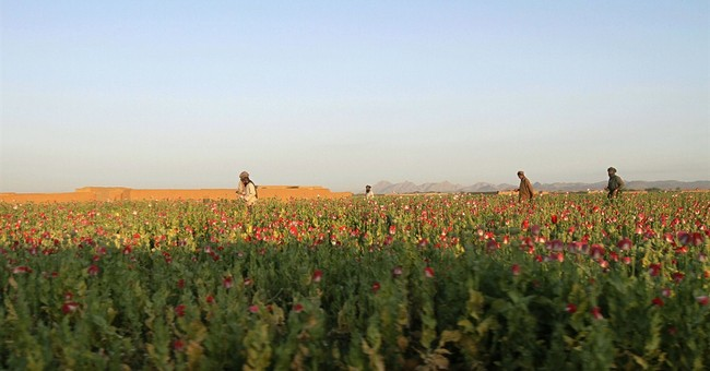 Afghan poppy farmers say new seeds will boost opium output
