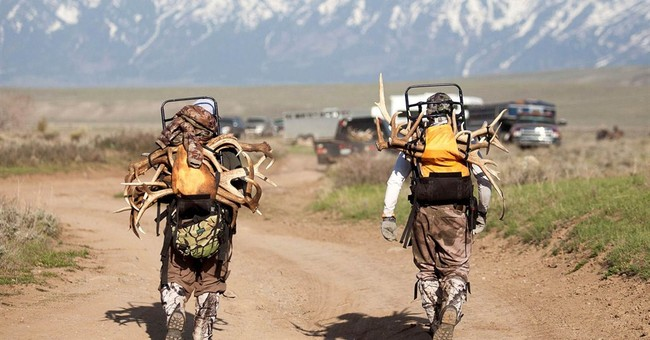 Ill-fated Wyoming antler hunt likely will lead to review