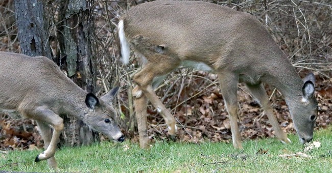 Winter proves tough on deer, states weigh hunting limits