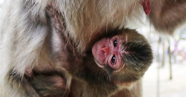 Japan zoo apologizes for naming newborn monkey Charlotte