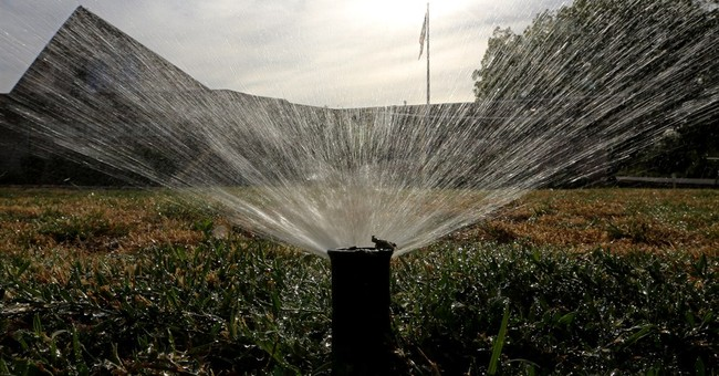 Want to save water? Kill the lawn, time your showers