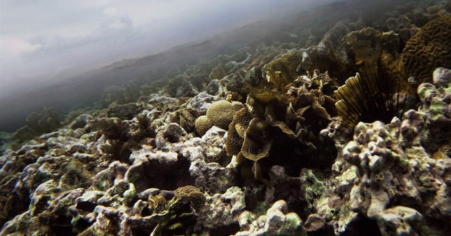 Belize offshore oil plan sparks worries for reefs, fisheries