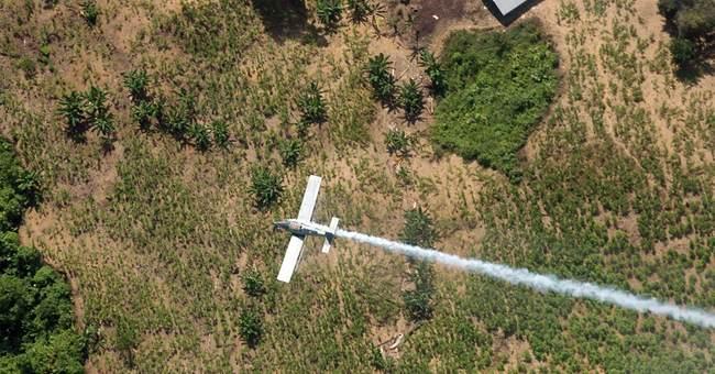 Colombia suspending use of anti-coca herbicide