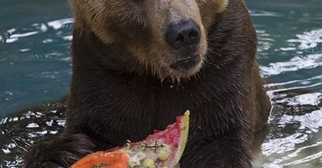 Rio de Janeiro zoo animals devour icy treats in heat