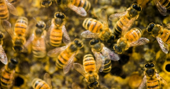Survey: More than 40 percent of bee hives died in past year