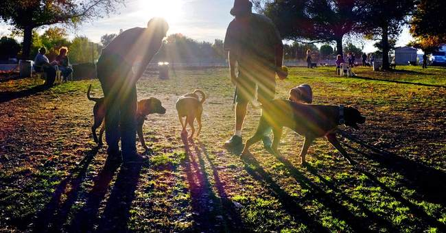Reducing dog bites starts with how kids approach pooches