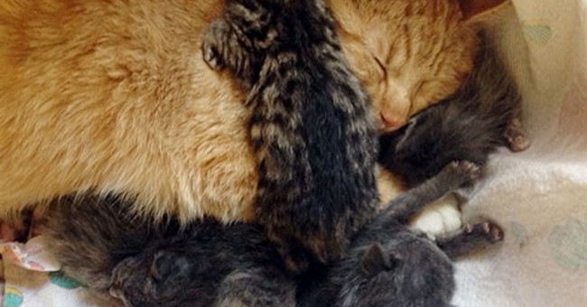 Male cat nurtures kittens abandoned in southeast Alaska