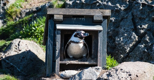Norwegian police suspect 4 in penguin theft from animal park