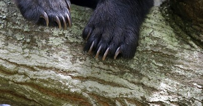 Bear that enthralled Louisiana neighborhood takes his leave