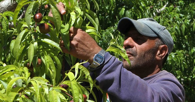 Syrian refugees struggle amid aid cuts, lack of labor rights