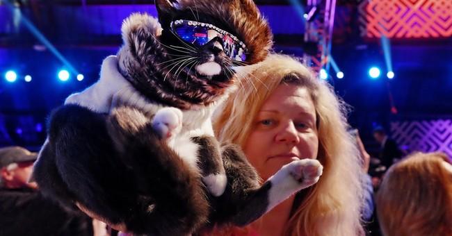 'Paw-paparazzi' take note: World Dog Awards honor star pets