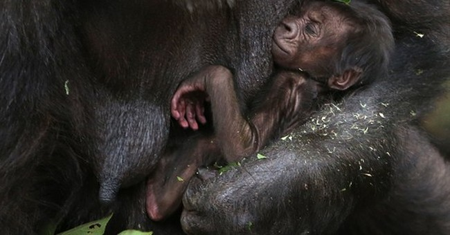 Image of Asia: A tight hold on her new baby