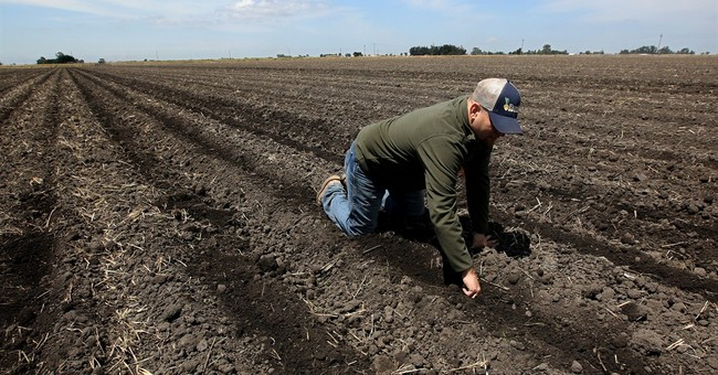 California farmers agree to drastically cut water use
