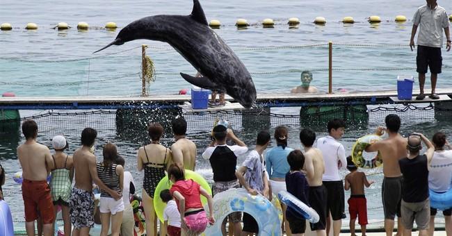 Japan aquariums say they'll stop getting Taiji-hunt dolphins