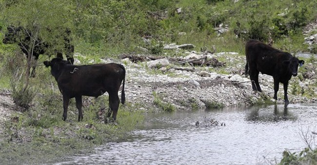 Drenching rains green pastures, bode well for herd expansion