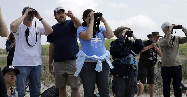Saved from Sandy: Shorebird efforts are declared a success