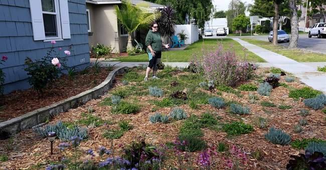 Popular cash-for-grass program expands during drought