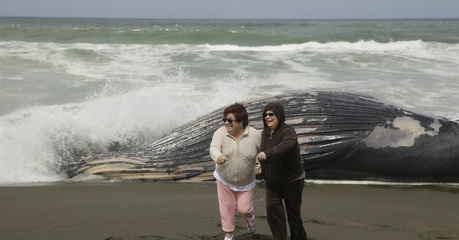 Whale washes ashore in 12th recent death in California