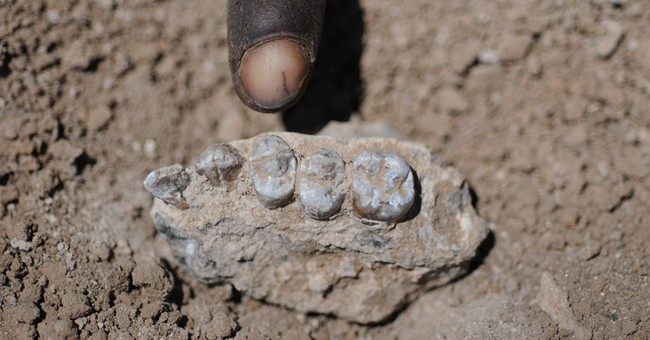 Study: Ethiopian fossils indicate new forerunner of humans