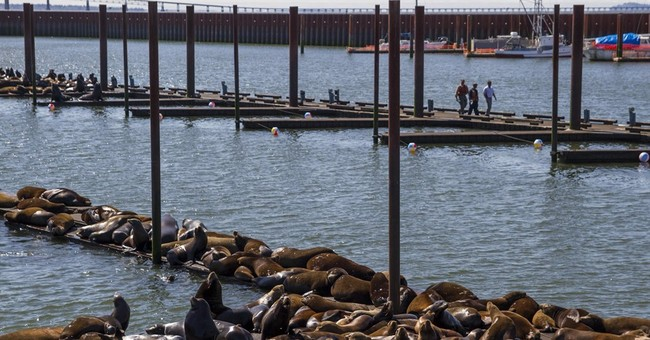 Sea lion impaled with spear rescued in Southern California