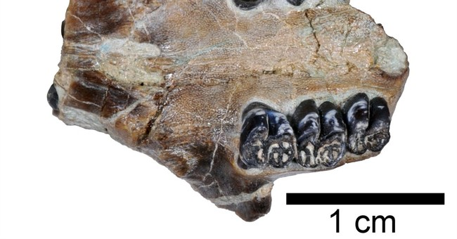 Fossils of previously unknown beaver species found in Oregon