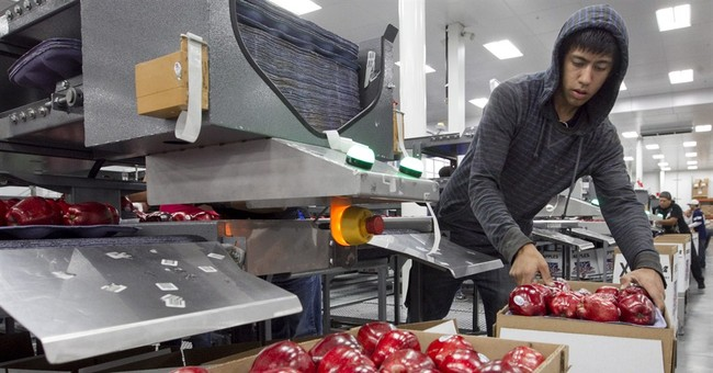 Washington farmers are dumping unprofitable apples