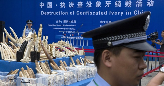 China destroys more than 660 kilograms of smuggled ivory