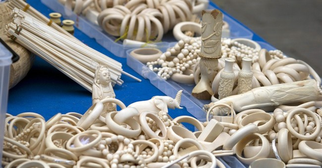 China destroys more than 660 kilograms of smuggled ivory