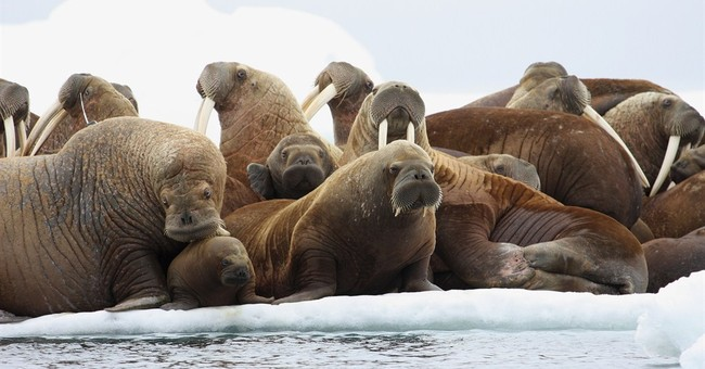 Groups sue agency to block Shell's Arctic offshore drilling