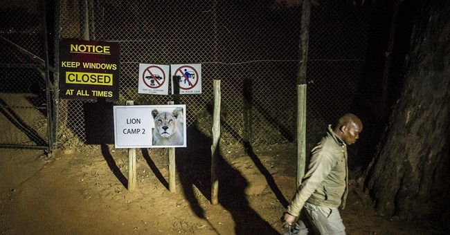Business as usual at SAfrican lion park after fatal attack