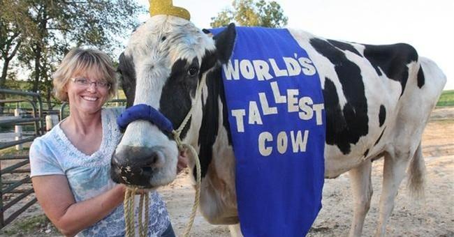 Blosom, the world's tallest cow, dies in northern Illinois