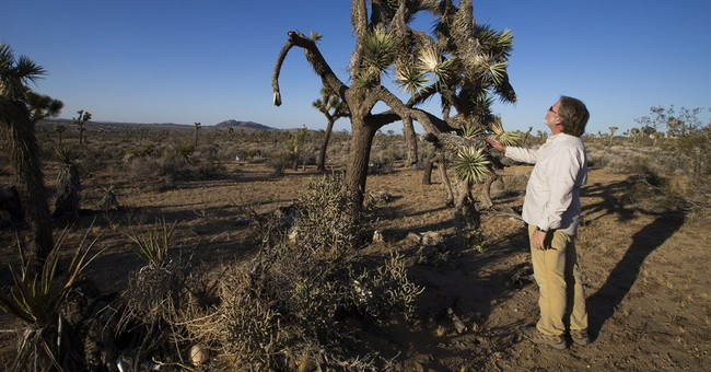 Drought speeds decline of beloved California desert species