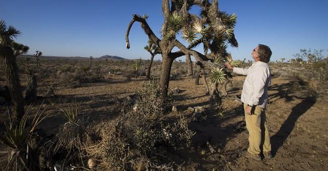 Drought speeds decline of beloved California desert species