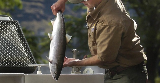 Feds release plan for recovering Northwest fish species