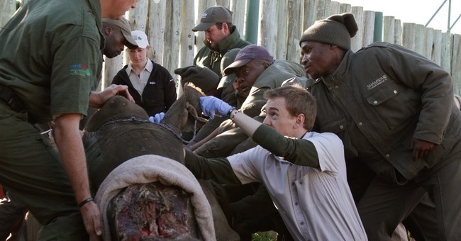South African veterinarians intervene to save Hope the rhino