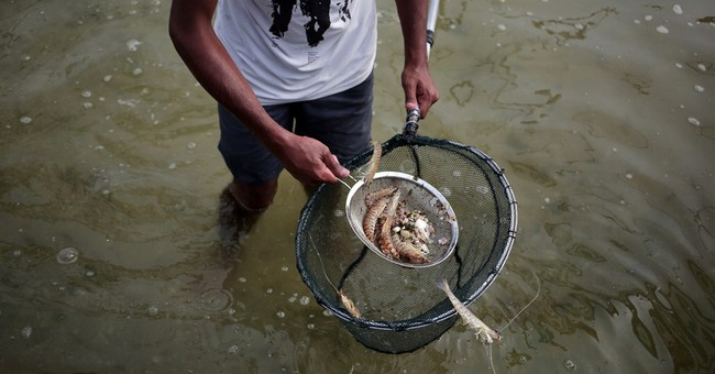 In Gaza Strip, fish farms bring relief to seafood lovers