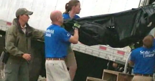 Shark dies after transport truck runs off Florida interstate