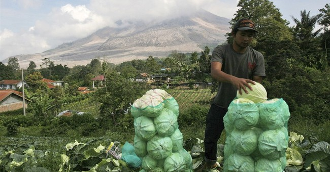Image of Asia: Harvesting in the fields near Mount Sinabung