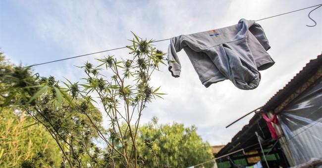 AP PHOTOS: Marijuana clubs sprouting up in Uruguay