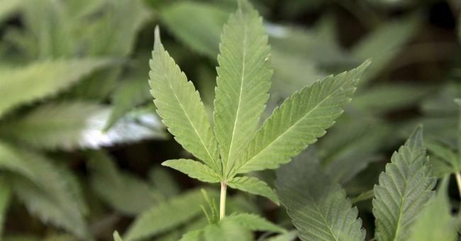 Got pot? San Francisco to host medical marijuana food fair
