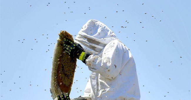 Some common questions about killer bees menacing Arizona