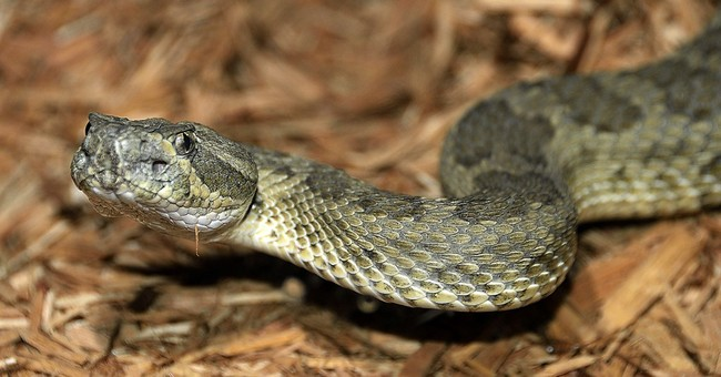 Navajo beliefs on snakes lead tribal zoo to abandon exhibit