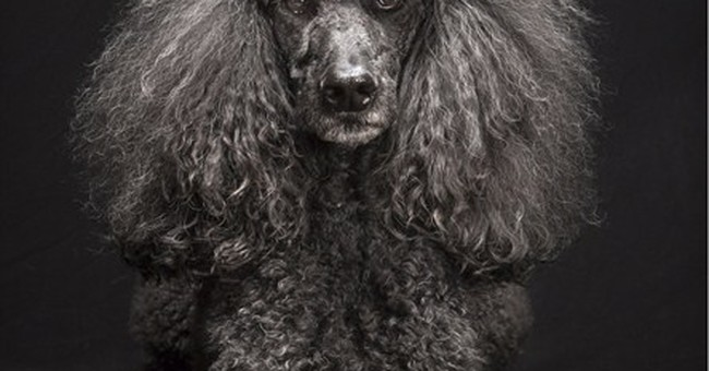 Pet photo series aims to counter 'black dog' theory