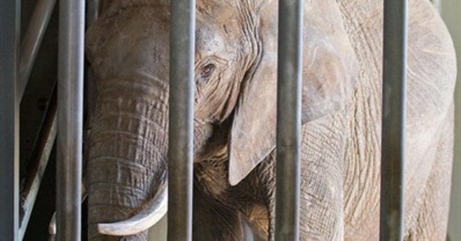 Elephant that killed German man relocated to a safari park